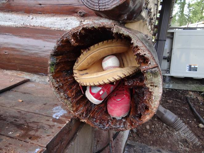 What can you fit inside a log?